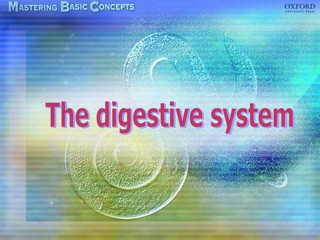 Components of the digestive system The alimentary canal Digestive glands Human digestive system The digestive system of a rat Peristalsis The structure.