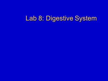 Lab 8: Digestive System. Announcements Exams Lab notes will be on reserve in library and on the web.