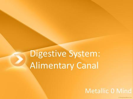 Digestive System: Alimentary Canal Metallic 0 Mind.