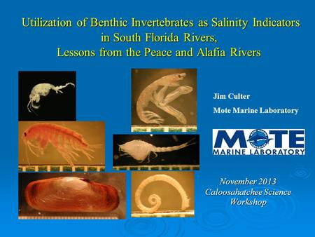 Utilization of Benthic Invertebrates as Salinity Indicators in South Florida Rivers, Lessons from the Peace and Alafia Rivers Utilization of Benthic Invertebrates.