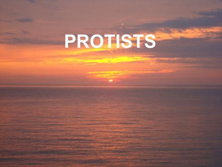 PROTISTS. COMMON EXAMPLES: Amoeba, paramecium, euglena, volvox, plasmodium EUKARYOTIC Have a nuclear membrane VERY DIVERSE GROUP most are unicellular,