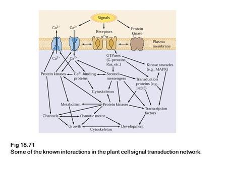 Fig 18.71 Some of the known interactions in the plant cell signal transduction network.