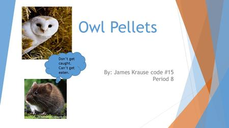 Owl Pellets By: James Krause code #15 Period 8 Don't get caught. Can't get eaten.