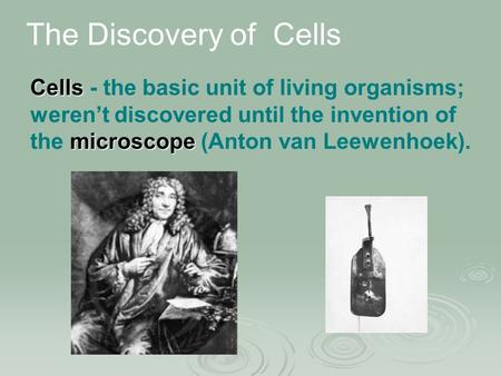 Cells - the basic unit of living organisms; weren't discovered until the invention of the m mm microscope (Anton van Leewenhoek). The Discovery of Cells.