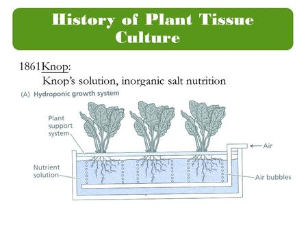 History of Plant Tissue Culture