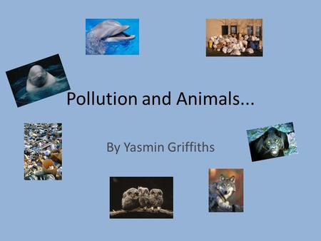 Pollution and Animals... By Yasmin Griffiths. Garbage There is plenty of garbage that pollutes our planet. Like cans, plastic bags, trolleys left in a.