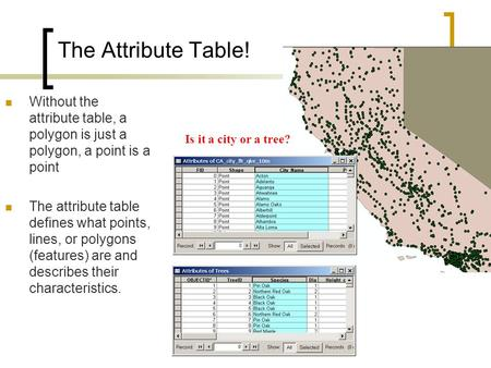 The Attribute Table! Without the attribute table, a polygon is just a polygon, a point is a point The attribute table defines what points, lines, or polygons.
