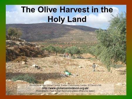 The Olive Harvest in the Holy Land Produced at the Global Centre, Exeter Community Centre, St David's Hill  Photographs: