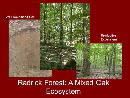 Radrick Forest: A Mixed Oak Ecosystem