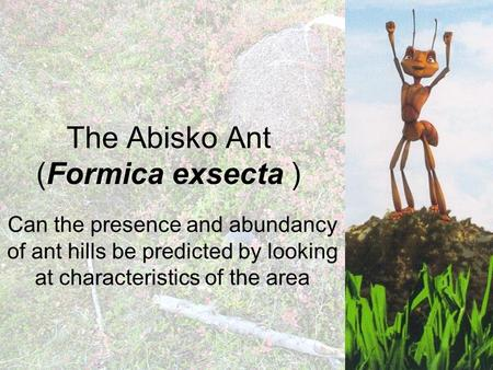 The Abisko Ant (Formica exsecta ) Can the presence and abundancy of ant hills be predicted by looking at characteristics of the area.