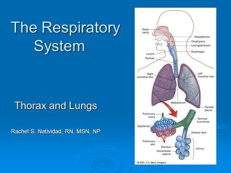 The Respiratory System Thorax and Lungs Rachel S. Natividad, RN, MSN, NP.