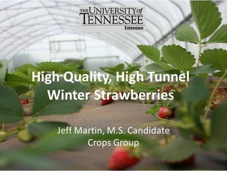High Quality, High Tunnel Winter Strawberries Jeff Martin, M.S. Candidate Crops Group.