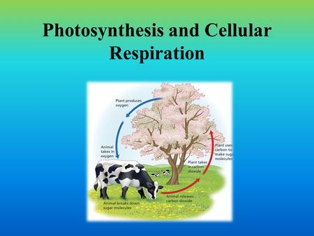 Photosynthesis and Cellular Respiration. Photosynthesis and Cellular respiration Both pathways have to do with the gathering and storing of energy to.