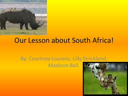 Our Lesson about South Africa! By: Courtney Lourens, Lilly Strickland, Madison Ball.