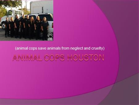 (animal cops save animals from neglect and cruelty)