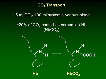 CO 2 Transport ~5 ml CO 2 / 100 ml systemic venous blood ~20% of CO 2 carried as carbamino-Hb (HbCO 2 ) H N H N H COOH HbHbCO 2.