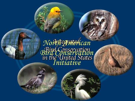 North American Bird Conservation Initiative. What NABCI is A vision — an approach to bird conservation A Forum — for working together to make conservation.