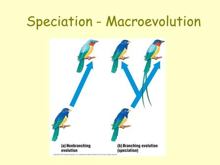 Speciation - Macroevolution. What is a Species? Morphological species Problems?