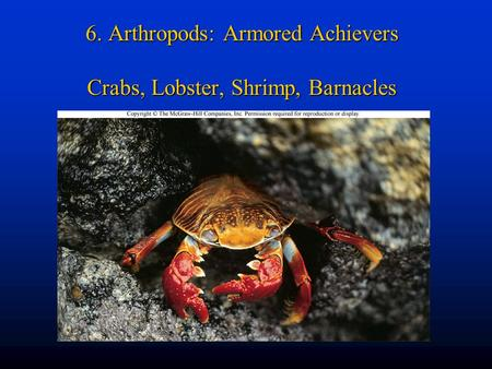 6. Arthropods: Armored Achievers Crabs, Lobster, Shrimp, Barnacles.