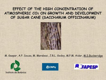 EFFECT OF THE HIGH CONCENTRATION OF ATMOSPHERIC CO 2 ON GROWTH AND DEVELOPMENT OF SUGAR CANE (SACCHARUM OFFICINARUM) M. Gaspar, A.P. Souza, M. Marabesi,