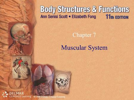 Chapter 7 Muscular System.