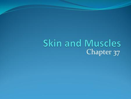 Chapter 37. What do you think the functions of the skin are?