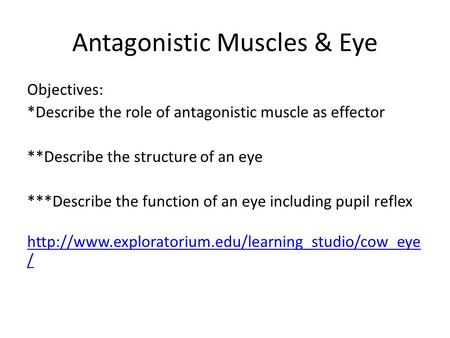 Antagonistic Muscles & Eye Objectives: *Describe the role of antagonistic muscle as effector **Describe the structure of an eye ***Describe the function.