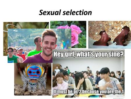 Sexual selection. Sexual selection can drive speciation.
