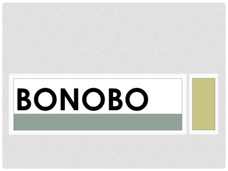 BONOBO. GENERAL INFORMATION Location: Democratic Republic of Congo Between the Walaba and Sankuru Rivers Gestation: 8 months Doesn't mean that they're.