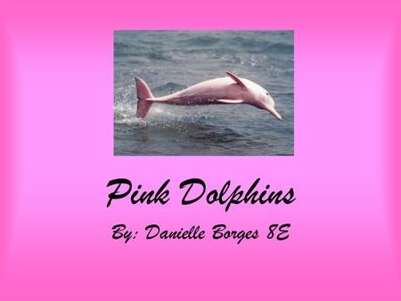 Pink Dolphins By: Danielle Borges 8E. Pink Dolphins Another name for the Pink Dolphin is Chinese White Dolphin (Sousa chinensis chinensis).
