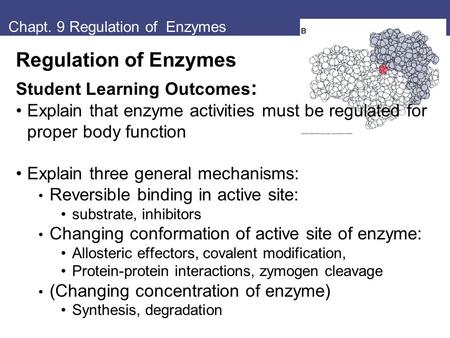 Chapt. 9 Regulation of Enzymes Regulation of Enzymes Student Learning Outcomes : Explain that enzyme activities must be regulated for proper body function.