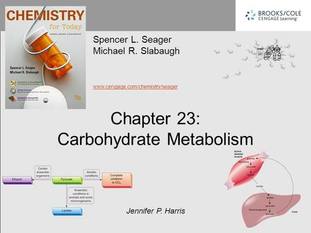 CARBOHYDRATE METABOLISM (DIGESTION)