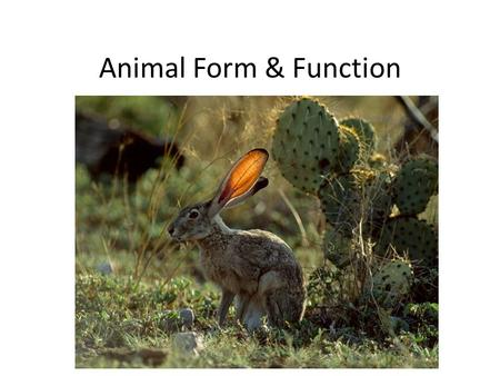Animal Form & Function. I. Characteristics of Life A. Livings things have to – obtain oxygen & nutrients, fight off infection, produce offspring B. All.
