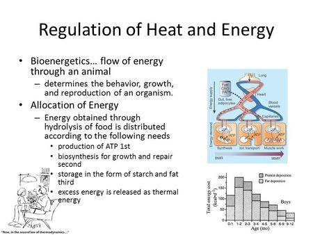Regulation of Heat and Energy Bioenergetics… flow of energy through an animal – determines the behavior, growth, and reproduction of an organism. Allocation.