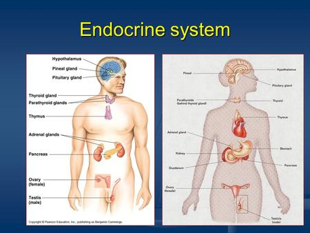 Endocrine system. Hormones Chemicals released by glands of the E.S. into the blood stream. Hormones regulate many bodily functions by sending messages.