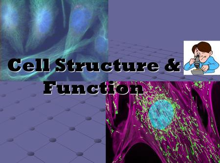 "Cell Structure & Function. Cell Organelles Organelle= ""little organ"" Found only inside eukaryotic cells."