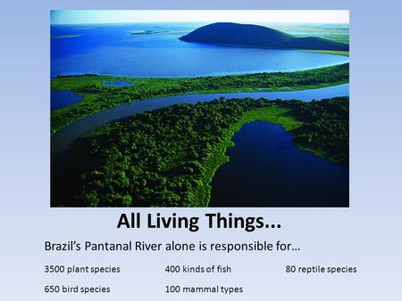 All Living Things... Brazil's Pantanal River alone is responsible for… 3500 plant species400 kinds of fish80 reptile species 650 bird species100 mammal.
