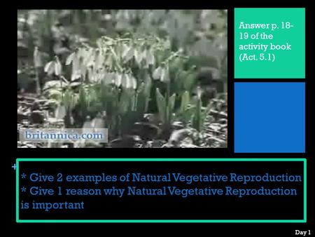 + * Give 2 examples of Natural Vegetative Reproduction * Give 1 reason why Natural Vegetative Reproduction is important Answer p. 18- 19 of the activity.