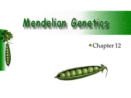 Chapter 12. Genetics: Study of heredity. Heredity: The passing of traits from parents to offspring. Mendel: The Father of Genetics I. Mendel: The Father.