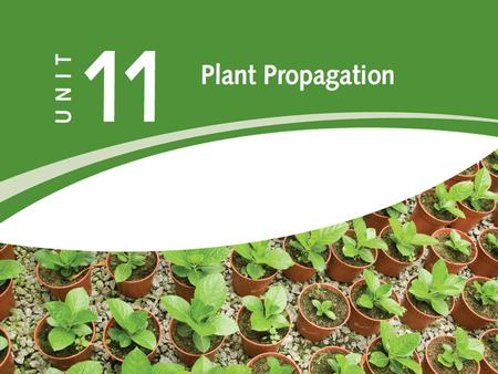 PLANT PROPAGATION  The creation of new life!  Propagation means to multiply or make new  Propagation methods require:  Knowledge  Skill  Practice.