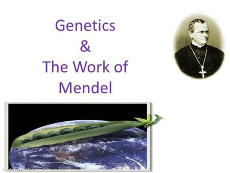 Genetics & The Work of Mendel Genetic Terminology Trait - any characteristic that can be passed from parent to offspring Heredity - passing of traits.