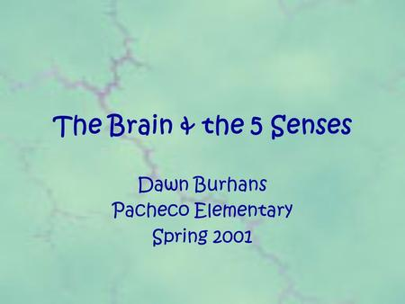 The Brain & the 5 Senses Dawn Burhans Pacheco Elementary Spring 2001.