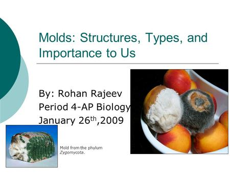 Molds: Structures, Types, and Importance to Us By: Rohan Rajeev Period 4-AP Biology January 26 th,2009 Mold from the phylum Zygomycota.