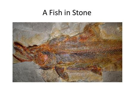 A Fish in Stone. I have been in that stone for over a million years. What a journey to finally come out and tell my story. Excuse me, my name is Coho.