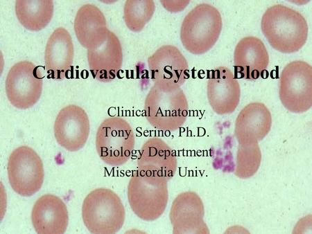 Cardiovascular System: Blood Clinical Anatomy Tony Serino, Ph.D. Biology Department Misericordia Univ.