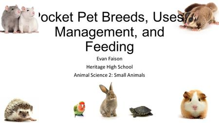 Pocket Pet Breeds, Uses, Management, and Feeding