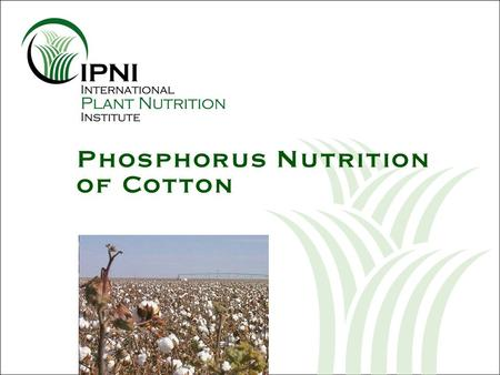 Phosphorus Nutrition of Cotton. Outline - P Nutrition of Cotton U.S. cotton yields since 1975 Growth and development of the cotton plant Nutrient uptake.