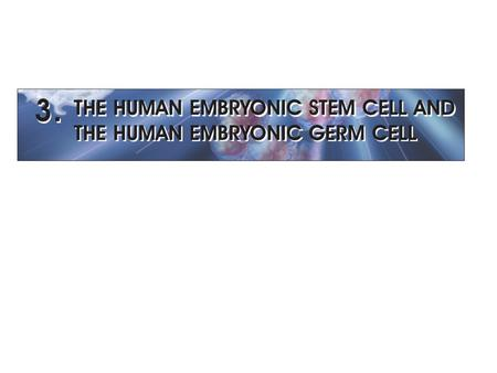OVERVIEW 1998 - James Thomson and his colleagues: the first derivation of human ES cells - John Gearhart: the first derivation of human EG cells Timeline.