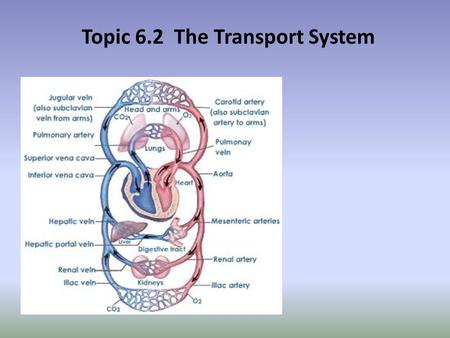 Topic 6.2 The Transport System