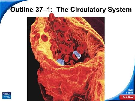 Outline 37–1: The Circulatory System
